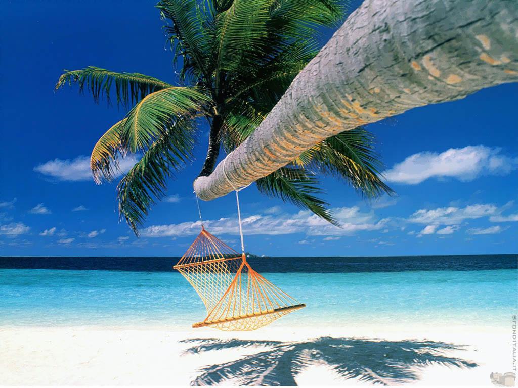 beach     beach scenes with hammock   wallpapers background  rh   awallpapersbackground blogspot co ke